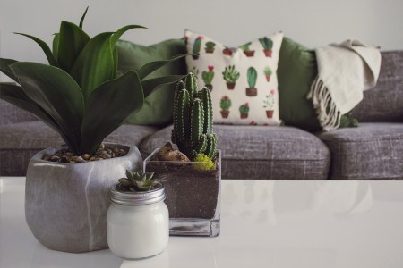 plant, cactus, pillow, couch, decoration, decor, table, room